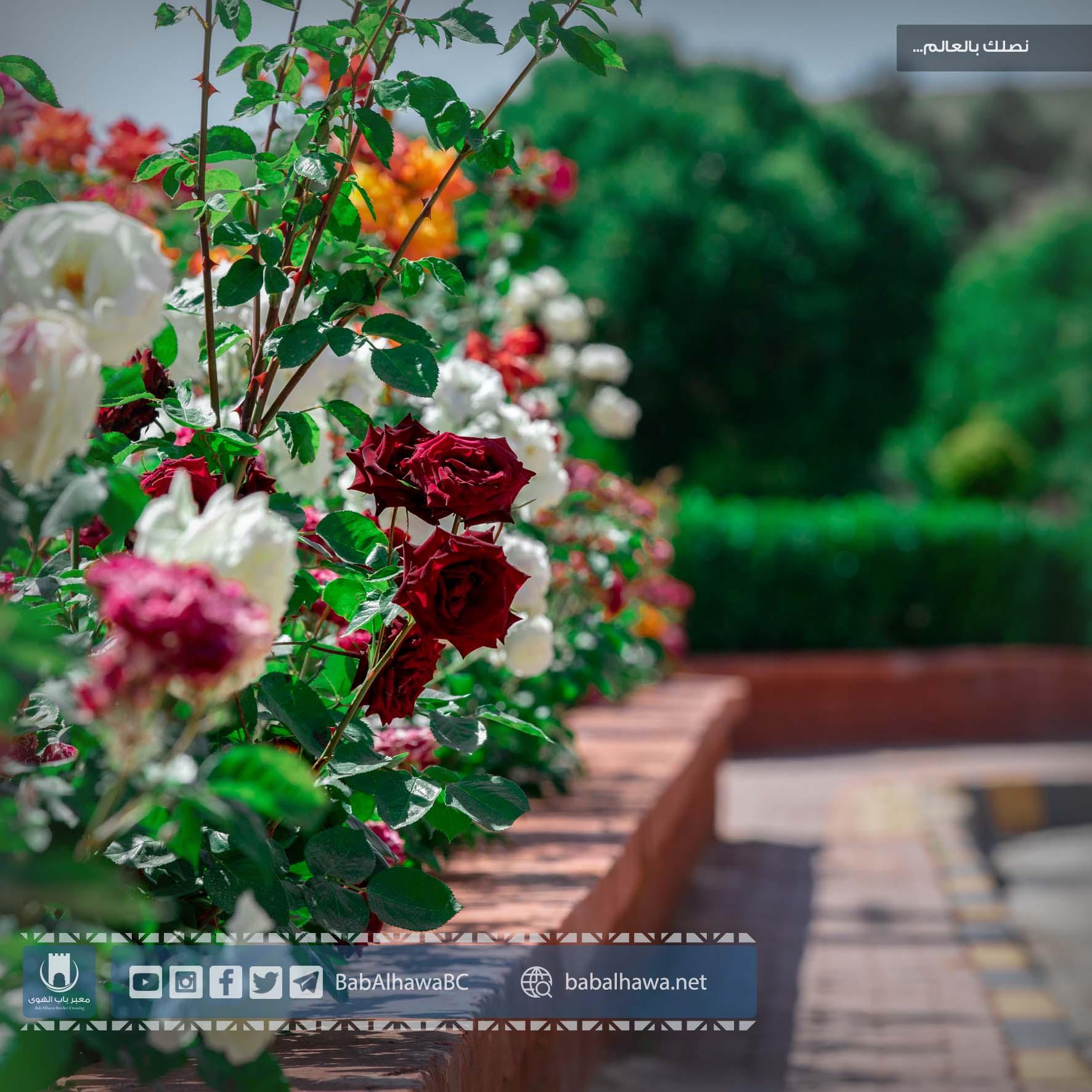 حديقة معبر باب الهوى - سوريا